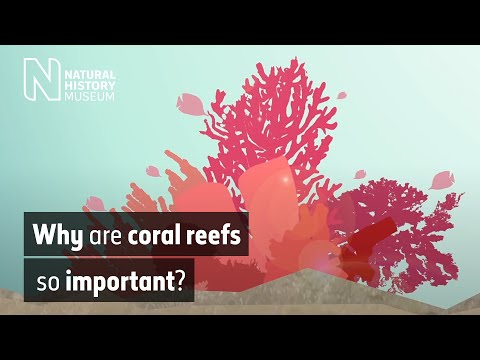 Why are coral reefs so important? | Natural History Museum