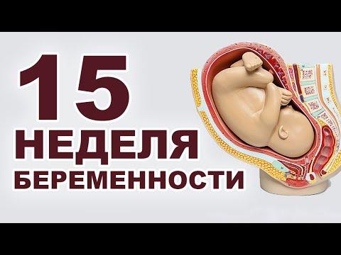Что происходит с мамой и ребенком на 15 неделе беременности?