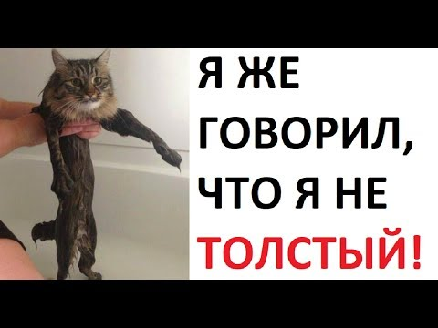 Лютые приколы. Я не ТОЛСТЫЙ !!!
