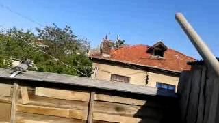 Konya karatay oyun güvercinleri ŞatırLı ahMet