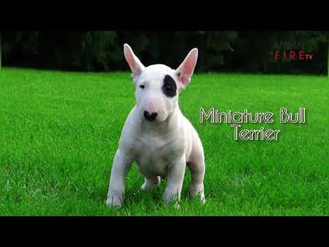 Top 10 EnergeticTerrier Dog Breeds