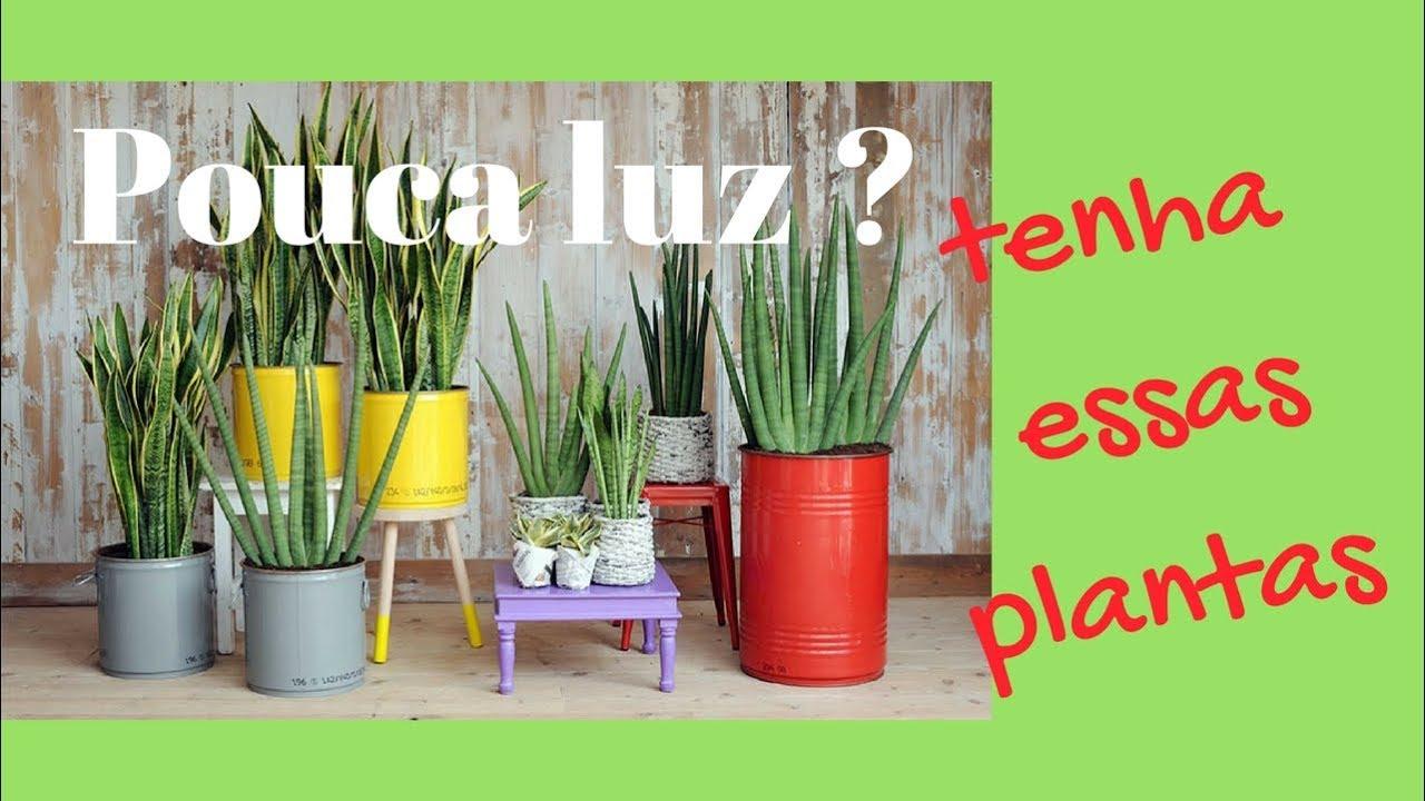 Essas plantas s o timas para ambientes de pouca luz youtube - Plantas de interior duraderas ...
