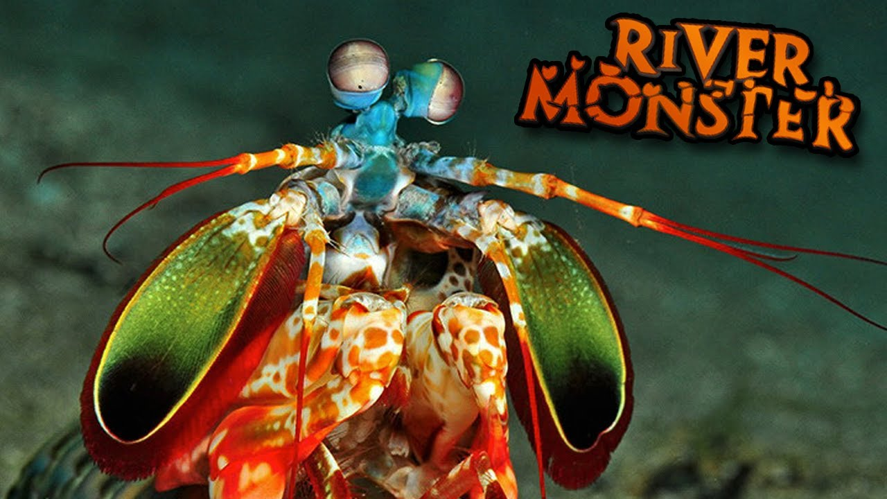 The mantis shrimp feed and grow ep9 youtube for Feed and grow fish online