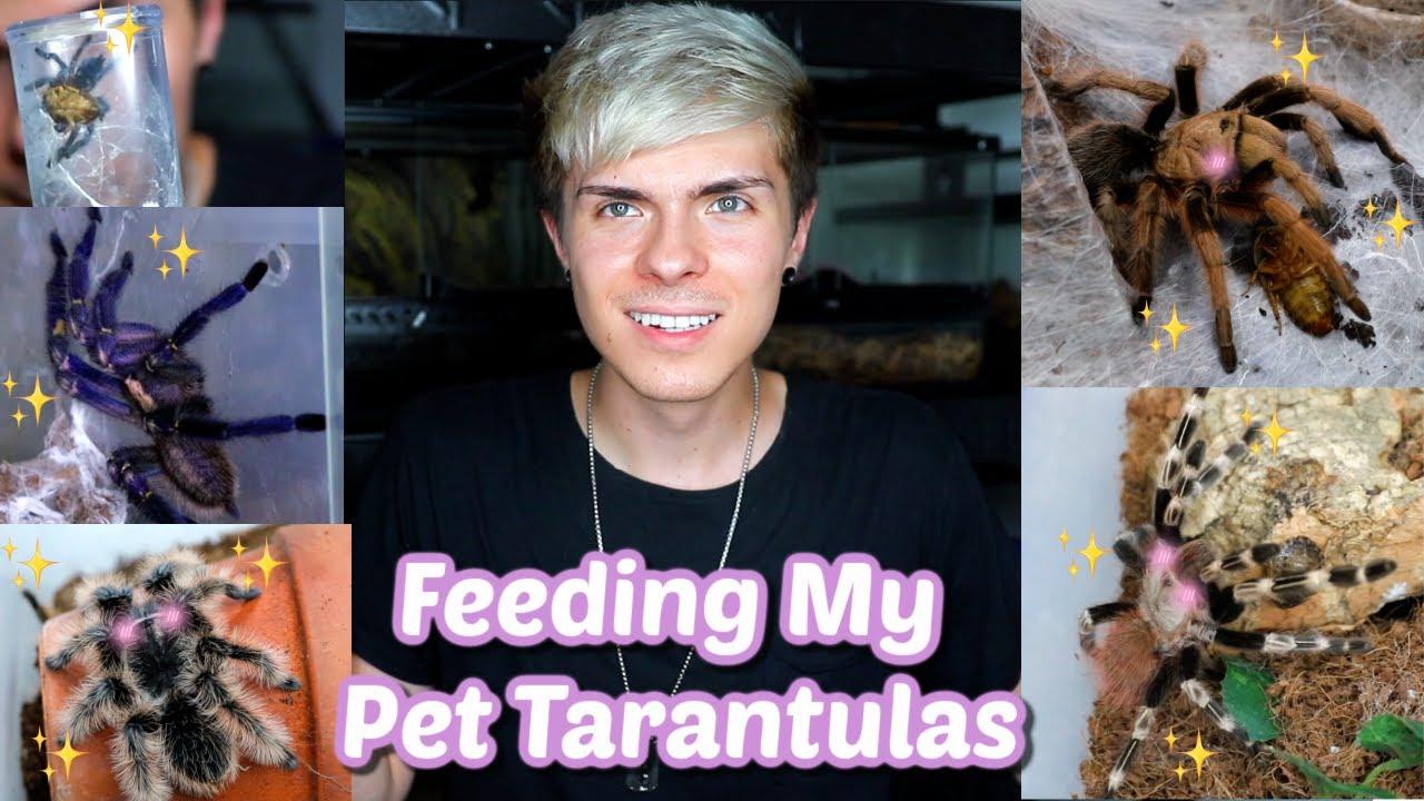 Feeding My 10 Pet Tarantulas!!!