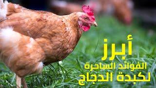 أبرز الفوائد الساحرة لكبدة الدجاج