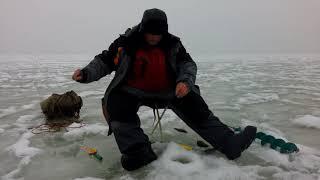 29 12 2017 р Тольятті , річка Волга, окунь порадував