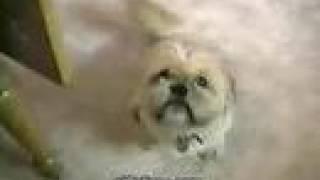 talking dogs : I love MAMA part 1