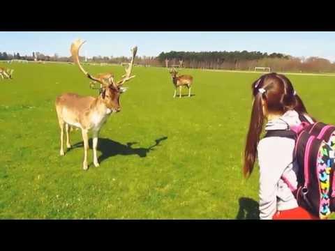 Feed the Reindeers in Phoenix Park, Dublin