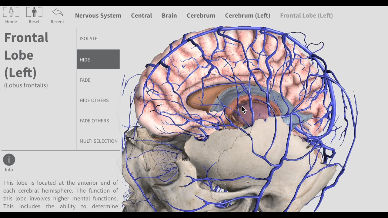 Venous system of CNS simple - YouTube