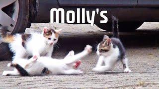 Funny Cats - Molly's Katzenbaby's spielen toben fressen Maus - Peters Bauernhof