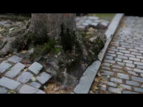 Photogrammetry: Père-Lachaise Demo