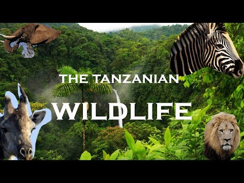 THE TANZANIAN WILDLIFE IN 3 MINUTES.