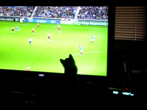 Moo Shu the Wonder Dog Likes Soccer