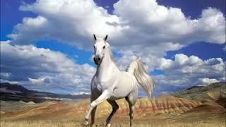 Самые красивые лошади Horse and horse