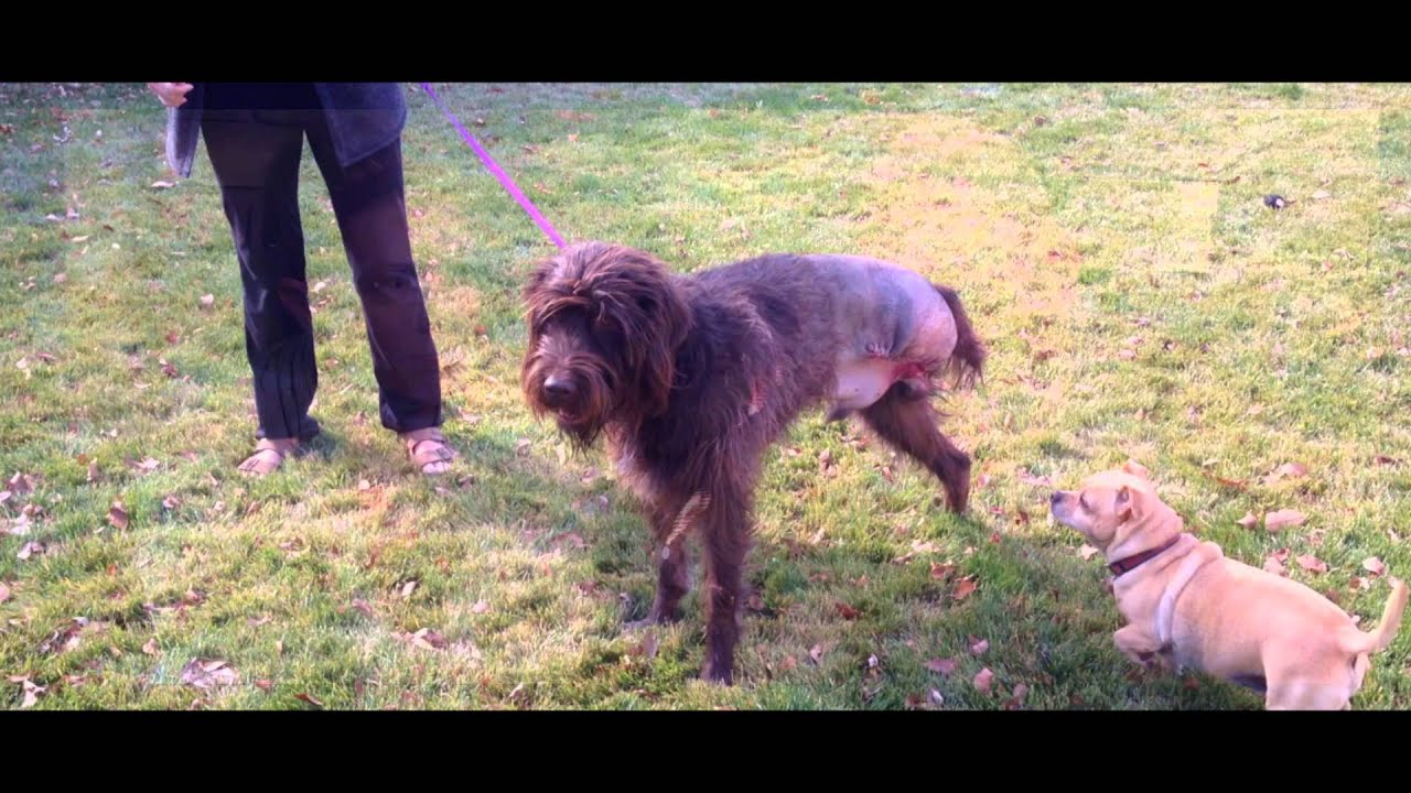 Success Stories | K9 Immunity Hope for Dogs with Cancer