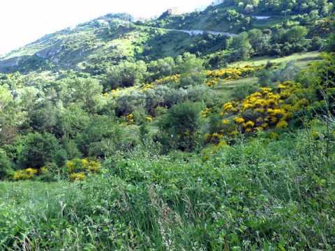 Le ginestre ed il lago di Fano di Schiavi di Abruzzo
