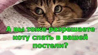 А вы тоже разрешаете коту спать в вашей постели.
