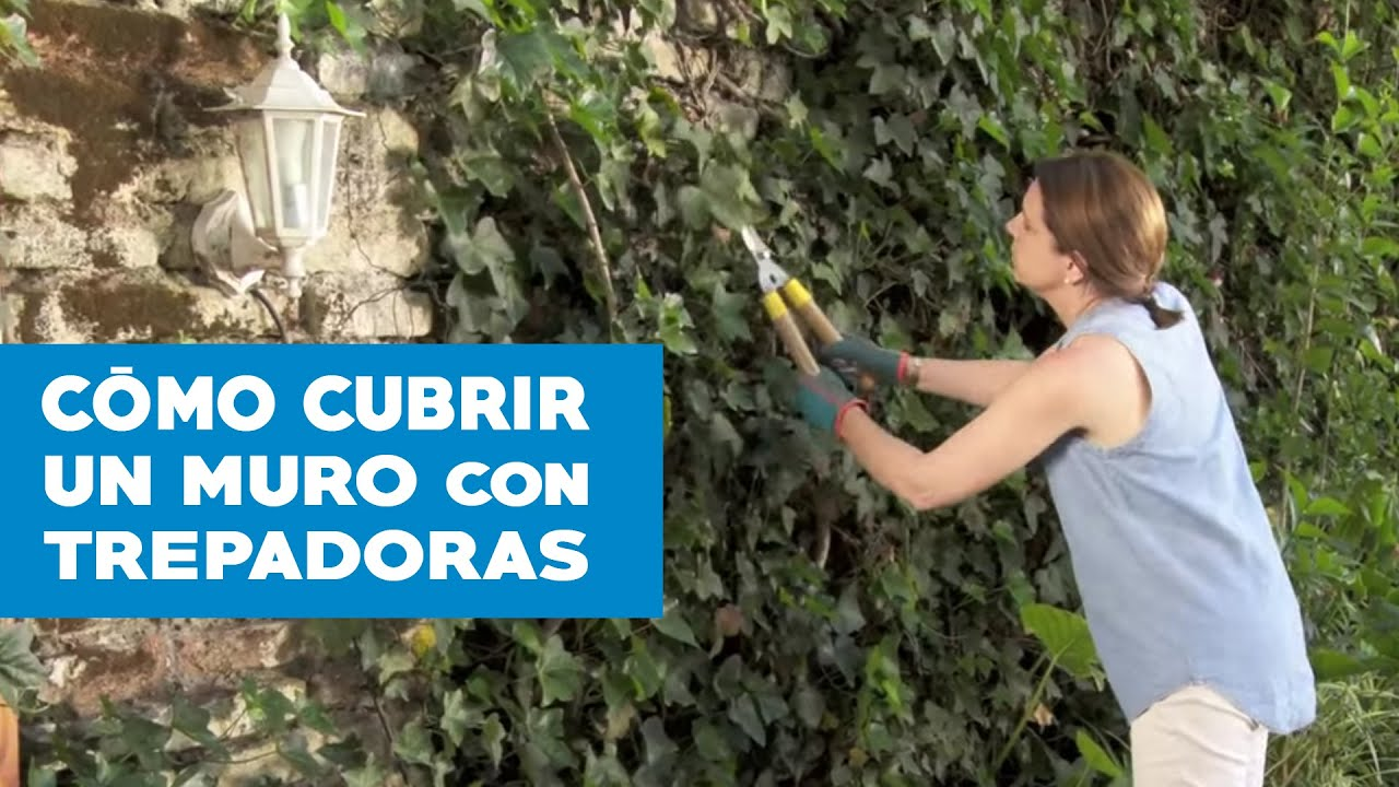 C mo cubrir un muro con trepadoras youtube for Como cubrir una pared