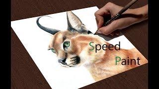 Рисую рысь (каракал). Drawing caracal.