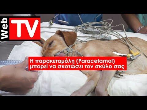 H παρακεταμόλη (Paracetamol) μπορεί να σκοτώσει τον σκύλο σας
