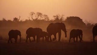 Planet Wissen - Elefanten
