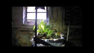 Garten: Empfindliche Pflanzen überwintern - meine Lösung