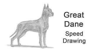 Great Dane Dog Time-lapse (Speed) Drawing