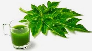 Consume Papaya Leaf Juice For These Incredible Health Benefits