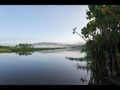 Guyane - Le marais de Kaw (octobre 2014) - 1080p