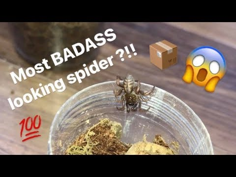 Unboxing my FIRST ever TRAPDOOR SPIDER !!! FINALLY got one !!!
