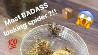 Unboxing my FIRST ever TRAPDOOR SPIDER !!! FINALLY got one !!! thumbnail