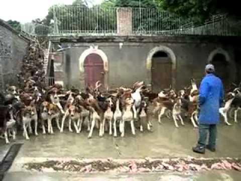 120 con chó săn được cho ăn tại Cheverny, Pháp (cuncung.org)