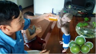 Baby Monkey Doo Drinks Orange Juice -  Grandparents' Gift - Funny Animals