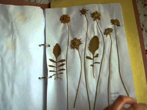 095- Qué es un herbario, cómo hacerlo, os enseño mis herbarios.