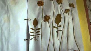095- Mis herbarios