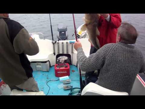 Cod Fishing Newbiggin UK 42lb 7oz