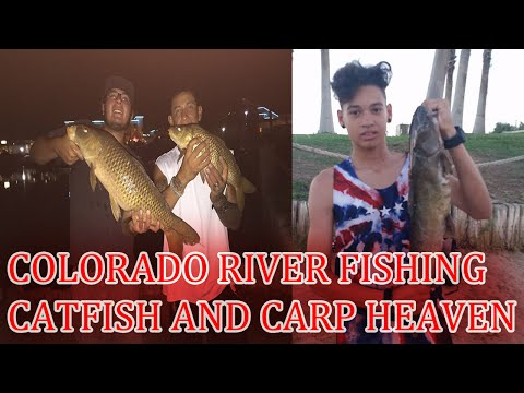 Channel catfish pulled from Colorado river.. from YouTube · High Definition · Duration:  36 seconds  · 335 views · uploaded on 9/8/2014 · uploaded by MR-FLIP