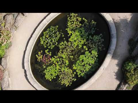 Oxford Botanic Garden and Arboretum by drone