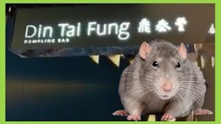 Rat Spotted in Din Tai Fung Dumplings Bar