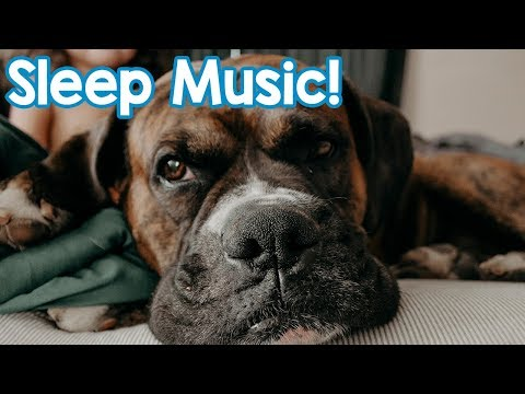 NEW Music for Dogs 2018! Help Your Dog Sleep and Chill with this Calming Music for Dogs and Puppies!