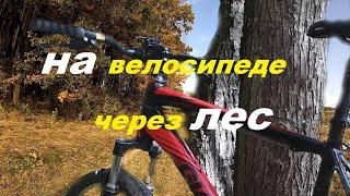Покатушка на велосипеде через лес / Mountain biking in the forest