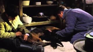"""Il WWF intervista Jean Jacques Annaud, regista de """"L'ultimo lupo"""""""