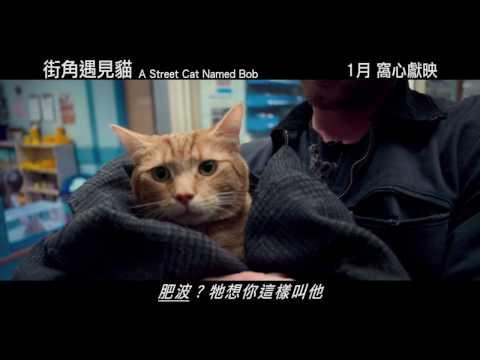 街角遇見貓電影預告