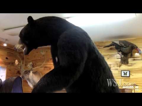 Taxidermists Cheer New Jersey Bear Hunt