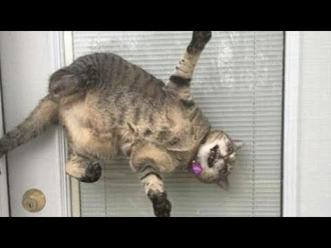 CATS that will make you LAUGH REALLY HARD - FUNNY CAT compilation