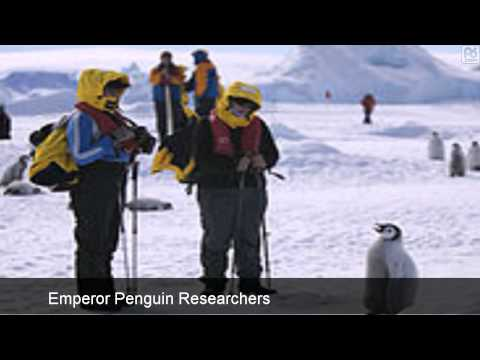Antarctic Emperor Penguin Population Approximated From Space