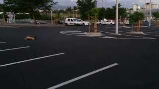 Modelisme su parking Decathlon 11/11/2013-1