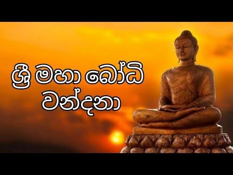 Sri Maha Bodhi Wandana | BODHI POOJA