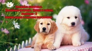 Смешные животные Домашние питомцы Кошки и собаки Подборка 8 милое видео для хорошего настроения