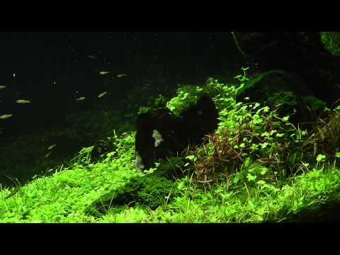 reciprocity-aquascape-1-year-old-by-james-findley